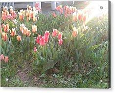 Brilliant Vibrance Of Spring Acrylic Print