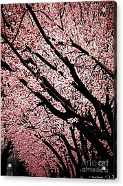 Bring On Spring Acrylic Print by Christy Ricafrente