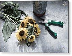 Bringing Blooms Indoors Acrylic Print