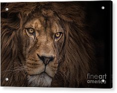 Brink Of Extinction Acrylic Print by Ashley Vincent