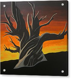 Bristle Cone Pine At Dusk Acrylic Print by Drew Shourd