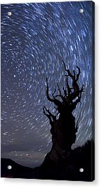 Bristlecone Star Trails Acrylic Print by Cat Connor