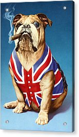 British Bulldog Acrylic Print by Andrew Farley