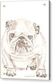 British Bulldog Winnie Acrylic Print