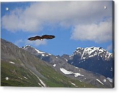 Broad Wings In The Mountains Acrylic Print by Tim Grams