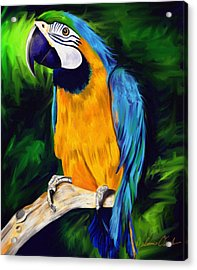 Brody Blue And Yellow Macaw Parrot Acrylic Print by Julianne  Ososke