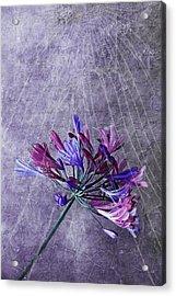 Broken Dreams Acrylic Print by Claudia Moeckel