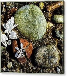 Broken Rock Dryas Acrylic Print