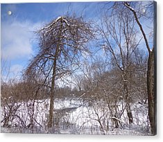 Broken Tree Acrylic Print by Jacque Hudson