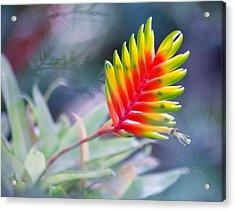 Bromeliad Beauty Acrylic Print by Eti Reid
