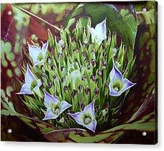 Bromeliad In Bloom Acrylic Print by Urszula Dudek