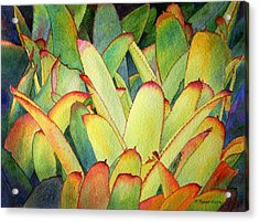 Acrylic Print featuring the painting Bromeliads I by Roger Rockefeller