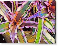 Bromeliads Acrylic Print by Judi Bagwell