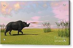Brontotherium Grazing In Prehistoric Acrylic Print