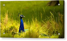 Bronx Zoo Peacock Acrylic Print