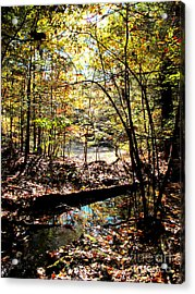 Brook And Pond Acrylic Print by Linda Marcille