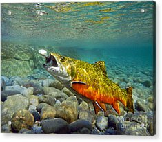Brook Trout And Mepp's  Acrylic Print