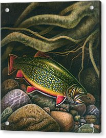 Brook Trout Lair Acrylic Print
