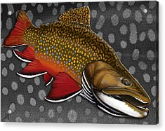 Brook Trout  Acrylic Print by Nick Laferriere