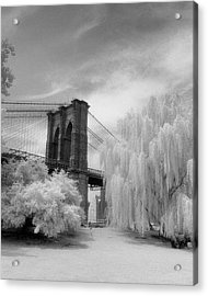 Acrylic Print featuring the photograph Brooklyn Bridge Willows by Dave Beckerman