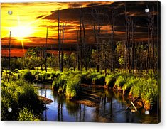 Brookstreet - Sunrise In The Forest Acrylic Print by Gary Smith