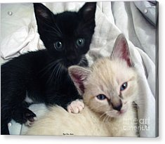 Brother N Sister Kittens Acrylic Print