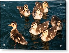 Brothers And Sisters Acrylic Print