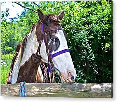 Acrylic Print featuring the photograph Brown And White Horse by Susan Leggett