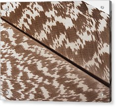 Brown And White Mottled Feather Acrylic Print