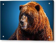 Brown Bear 2 Acrylic Print