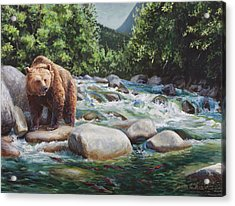 Brown Bear On The Little Susitna River Acrylic Print