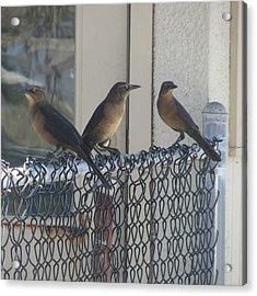Brown Birds At Fernandina Beach Acrylic Print by Cathy Lindsey