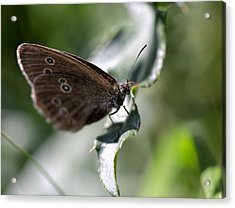 Acrylic Print featuring the photograph Brown Butterfly On Leaf by Leif Sohlman