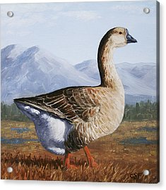 Brown Chinese Goose Acrylic Print by Crista Forest
