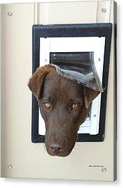 Brown Dog Acrylic Print by Gary Emilio Cavalieri