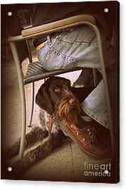 Acrylic Print featuring the photograph Brown Dog by Tanya  Searcy