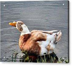 Brown Duck In Pond Acrylic Print by Lisa Williams