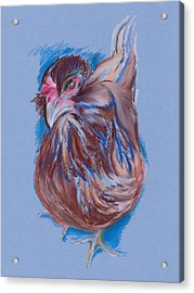 Brown Easter Egger Hen Acrylic Print by MM Anderson