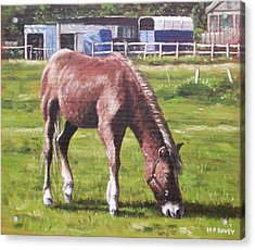 Brown Horse By Stables Acrylic Print by Martin Davey