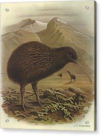 Brown Kiwi Acrylic Print