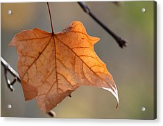 Brown Leaf Acrylic Print by Becky Lodes