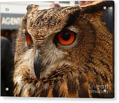 Acrylic Print featuring the photograph Brown Owl by Vicki Spindler