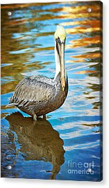 Brown Pelican Along The Bayou Acrylic Print by Joan McCool