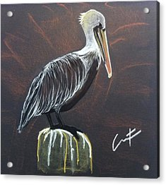 Brown Pelican At Shrimp Dock Acrylic Print