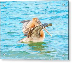 Brown Pelican Acrylic Print by Cindy Croal