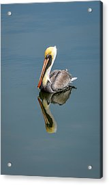 Brown Pelican Reflection Acrylic Print