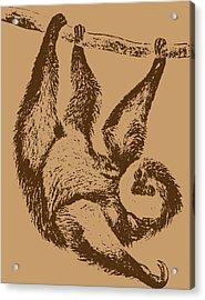 Brown Sloth Acrylic Print by