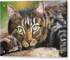 Brown Tabby Relaxing Acrylic Print