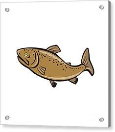 Brown Trout Fish Side Cartoon Acrylic Print by Aloysius Patrimonio