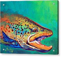 Brown Trout Portrait Acrylic Print by Savlen Art